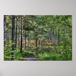 Nueva escena de la naturaleza de los árboles del a póster
