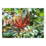 Nueva floración tarjeton