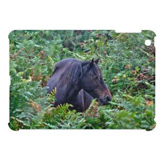 Nueva foto del potro del bosque para los Caballo-a