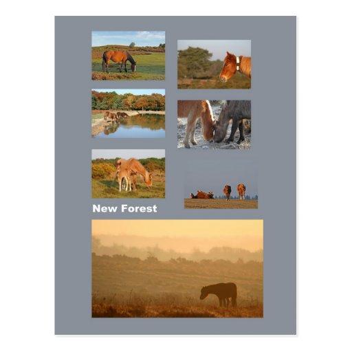 Nueva postal de los potros del bosque