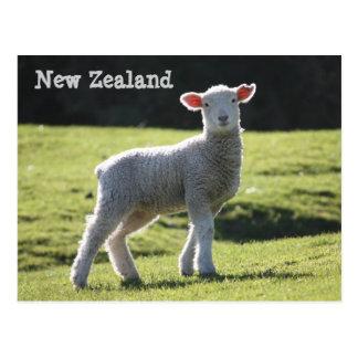 Nueva Zelanda - cordero adorable que le mira Postales