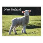 Nueva Zelanda - cordero adorable que le mira Postal