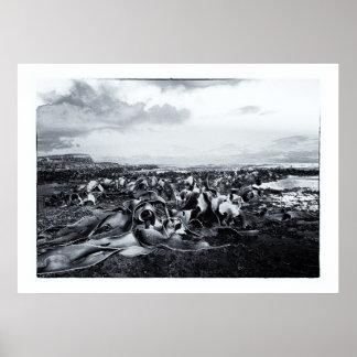 Nueva Zelanda, costa del quelpo - bahía del objeto Póster