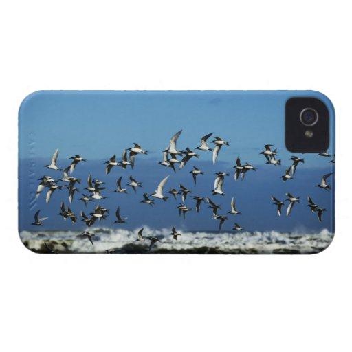 Nueva Zelanda, isla del sur, gaviotas que vuelan e iPhone 4 Carcasas
