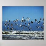 Nueva Zelanda, isla del sur, gaviotas que vuelan e Impresiones