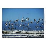 Nueva Zelanda, isla del sur, gaviotas que vuelan e Felicitación