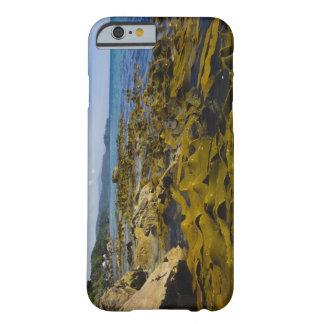 Nueva Zelanda, Southland, isla de Stewart. Quelpo Funda De iPhone 6 Barely There