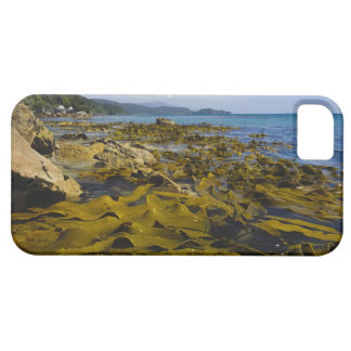 Nueva Zelanda, Southland, isla de Stewart. Quelpo iPhone 5 Carcasa