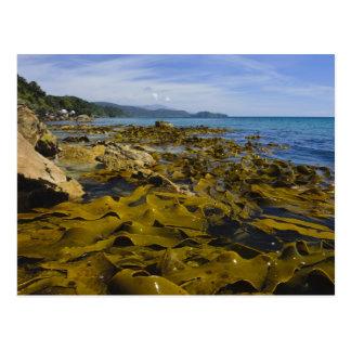 Nueva Zelanda, Southland, isla de Stewart. Quelpo Postal