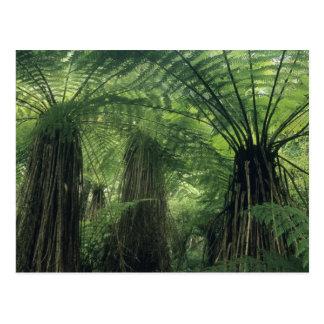 Nueva Zelanda, valle de Haast, Westland, árbol Postales