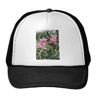 Nuevas flores rosadas del amanecer (Cymbidium) Gorras De Camionero
