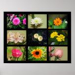 Nueve diversas flores 3 posters