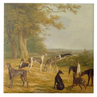Nueve galgos en un paisaje (aceite en lona) azulejo cerámica