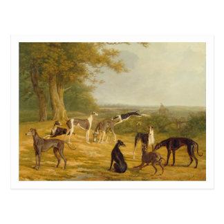 Nueve galgos en un paisaje (aceite en lona) postal