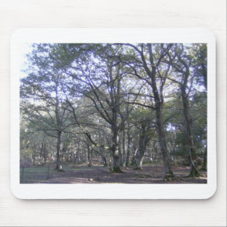 Nuevo bosque cerca de Linford Tapete De Ratones