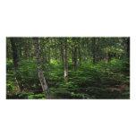 Nuevo bosque Inglaterra Tarjetas Personales Con Fotos