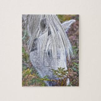 Nuevo potro blanco salvaje del bosque que pasta en rompecabeza con fotos