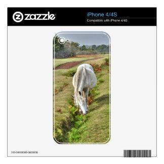 Nuevo potro blanco salvaje del bosque que pasta en skin para el iPhone 4S