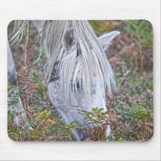 Nuevo potro blanco salvaje del bosque que pasta en tapetes de raton