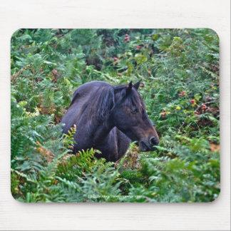 Nuevo potro negro raro del bosque - caballo mouse pads