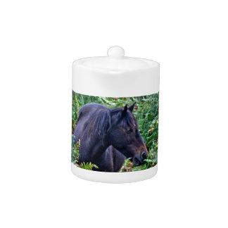 Nuevo potro negro raro del bosque - caballo salvaj