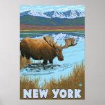 Nuevo YorkMoose que bebe en el lago Impresiones