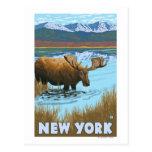 Nuevo YorkMoose que bebe en el lago Tarjetas Postales
