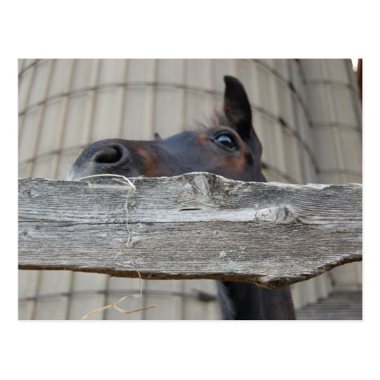 Nuevos potro/caballo postales