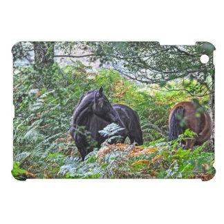 Nuevos potro y bosque negros Reino Unido del bosqu