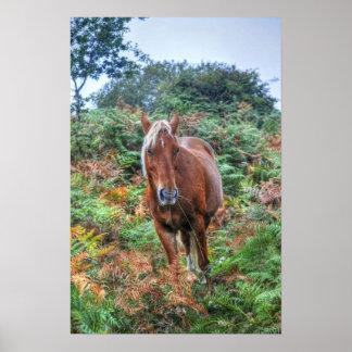 Nuevos potro y helecho - Inglaterra del bosque del Impresiones