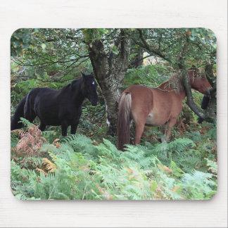 Nuevos potros del bosque de Hampshire Inglaterra Alfombrilla De Ratones