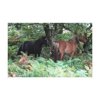 Nuevos potros del bosque de Hampshire Inglaterra Impresión En Lona Estirada