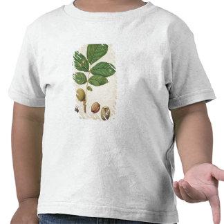 Nuez c 1568 w c en el papel camiseta