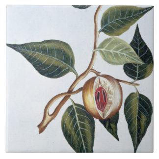 Nuez moscada moscada, placa 7, de la 'colección Pr Azulejos Ceramicos