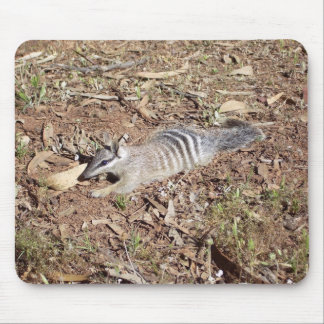Numbat Laying On Soil In The Sun Mousepads