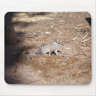 Numbat On Soil In The Sun Mousepads