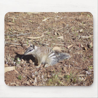 Numbat Sitting On Soil In The Sun Mouse Pads