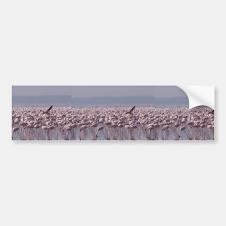Number Of Flamingoes On The Beach Car Bumper Sticker