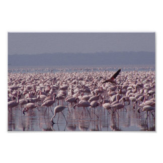 Number Of Flamingoes On The Beach Poster