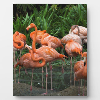 Number of Flamingos Display Plaque