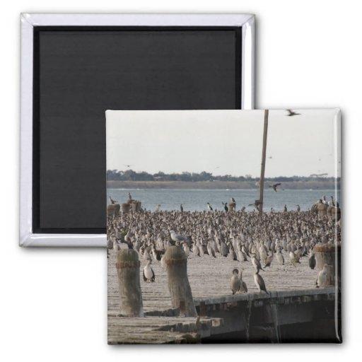 Number Of Sea Gulls On Wharf Refrigerator Magnet