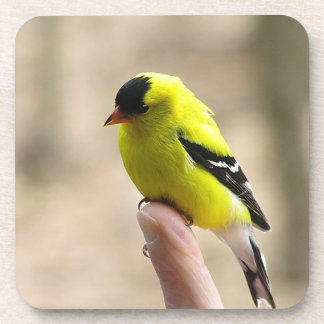 Number One Gold Finch Square Coasters
