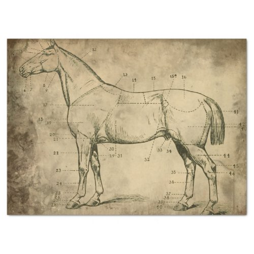 Numbered Horse Tissue Paper