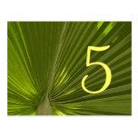 Número tropical de la tabla de la palma postal