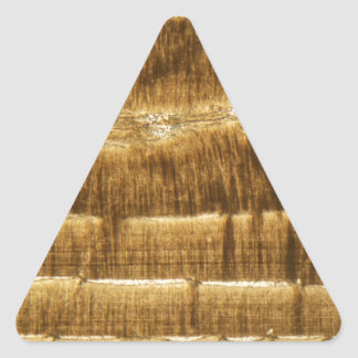 Nummulite limestone under the microscope triangle sticker