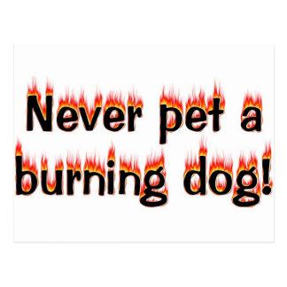 ¡Nunca acaricie un perro ardiente Tarjetas Postales