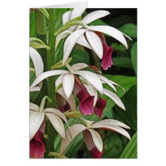 Nun's Orchid Blossoms Greeting Card