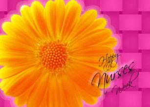 Nurses week cards greeting photo cards zazzle nurses week orange gerbera daisy card m4hsunfo Image collections