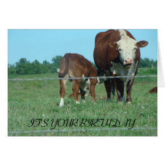 Nursing Calf, IT'S YOUR BIRTHDAY Card