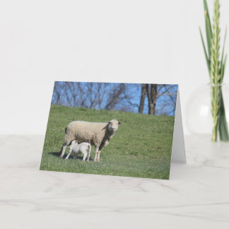 Nursing Lamb Card